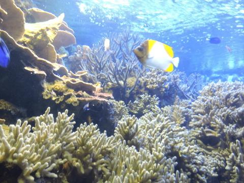 20170827-03_aquarium.JPG