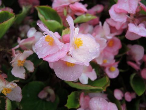20190703-09_flower.jpg